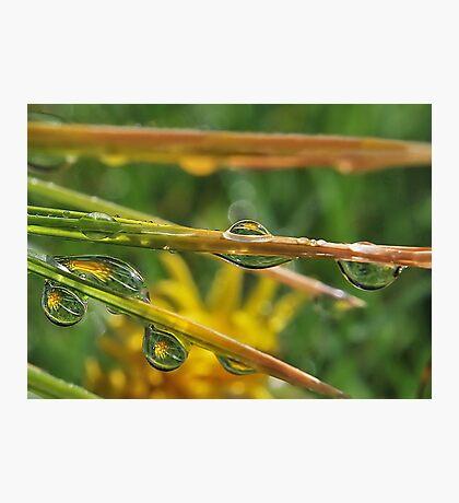 Dandelion Drops Photographic Print