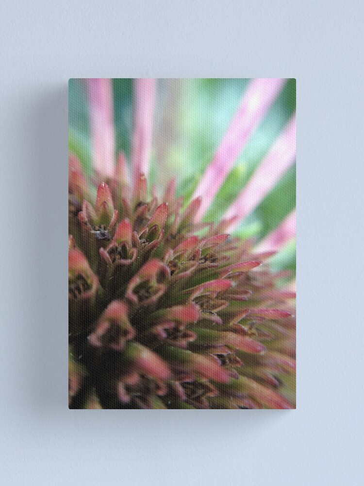 Alternate view of Coneflower Canvas Print