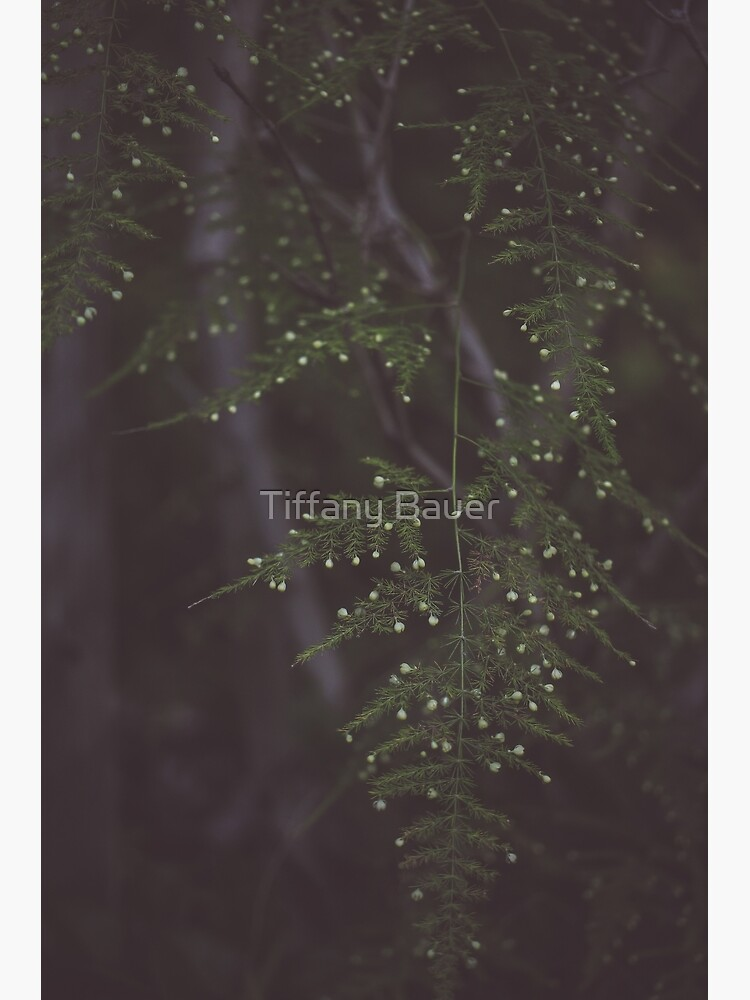 Fern by -tiffoto-