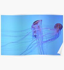 Jelly Fish - Atlanta Aquarium Poster