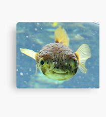 Smiling Fish Canvas Print