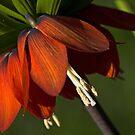 Florals by Dania Reichmuth