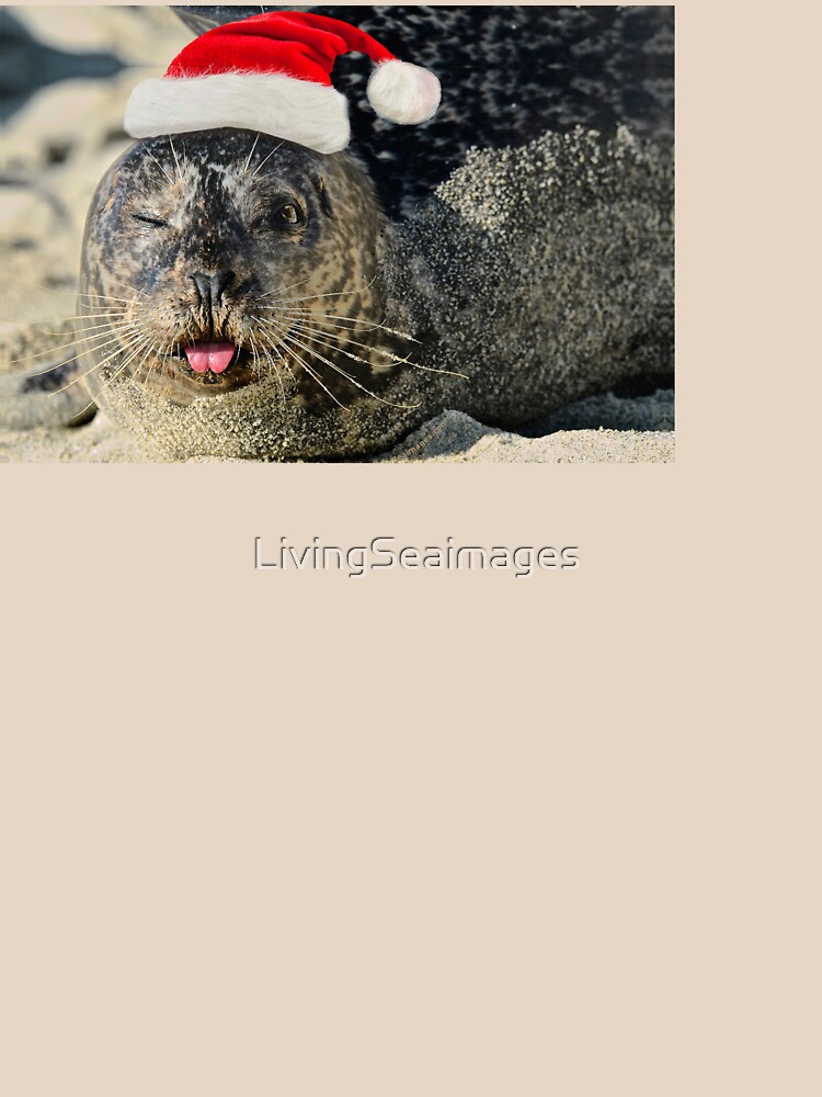 Holiday Harbor Seal by LivingSeaimages