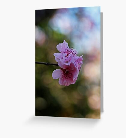 Before We Fade Away Greeting Card