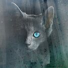 Kitty at the Window by Chris Armytage™