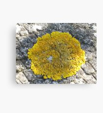 Macro On Yellow Lichen Canvas Print