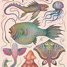 Sea life specimens by Vlad Stankovic