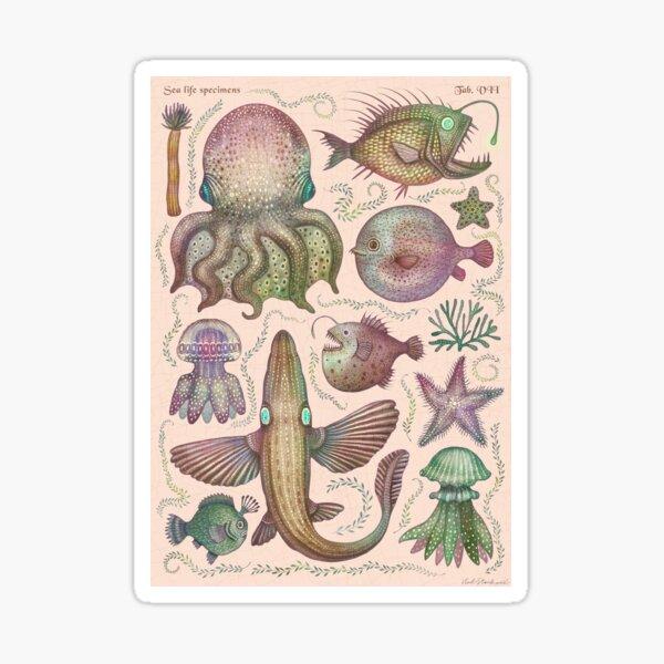 Sea life specimens Sticker
