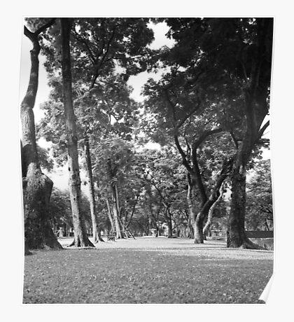Enchantment - Park Trees Poster
