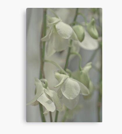 Orchid spray Canvas Print