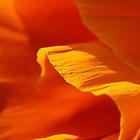 Orange by Leslie Guinan