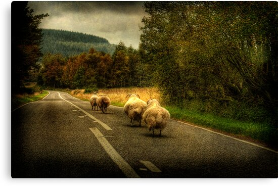 Wool on the run by bbtomas