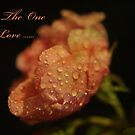 To The One I Love by SandiCards