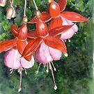 Fuchsia by Anne Sainz