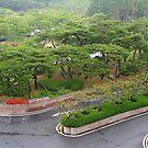 Garden View by Laurel Talabere