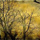 Beautiful  trees ©  by Dawn Becker