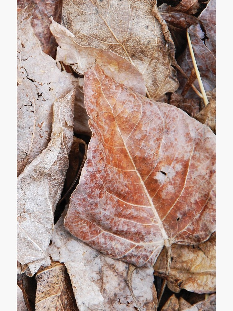 Decomposing Aspen Leaves by JaredManninen