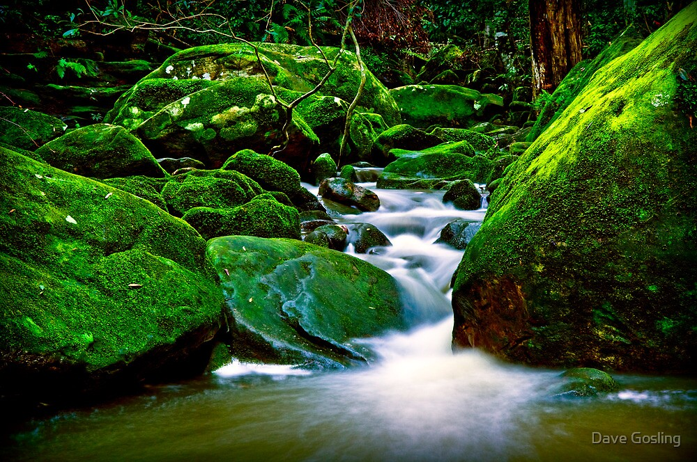 Cool green by Dave  Gosling Photography