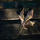 Fallen Leaf - Nicholas garden Mt. Dandenong by JohnBoyzo
