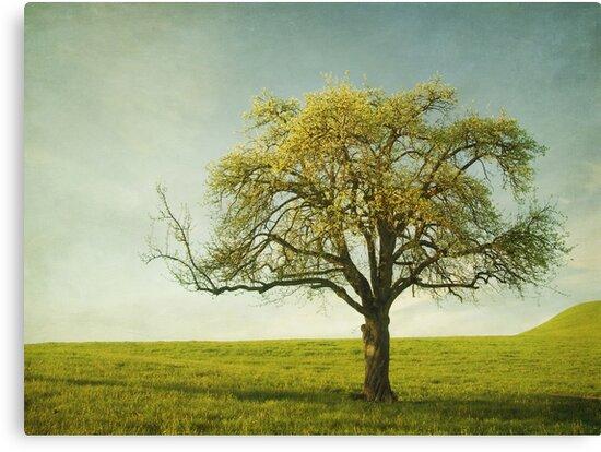 Appletree by Priska Wettstein