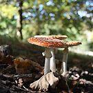 Mushrooms enjoying a bit of sun by Silvia Solberg
