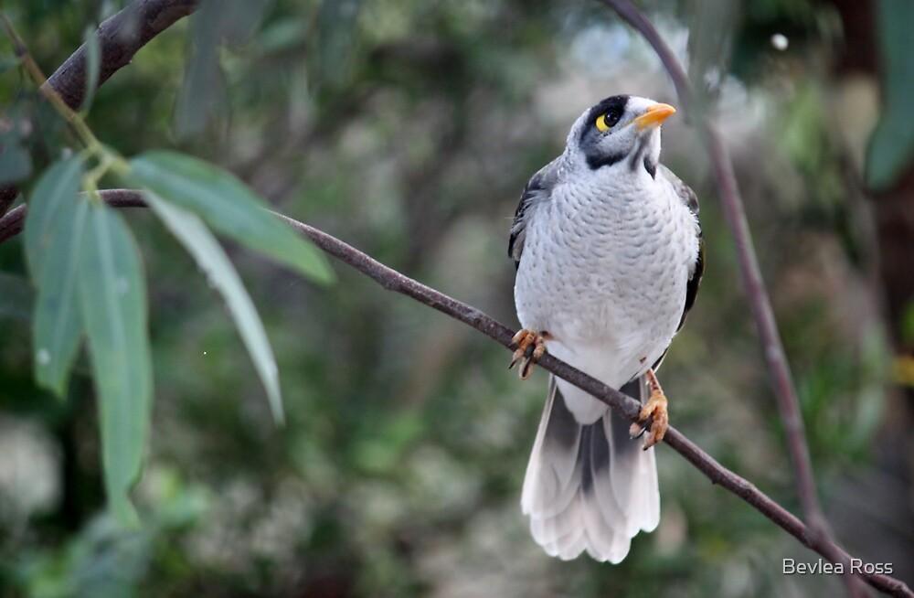 Bird Call by Bevlea Ross