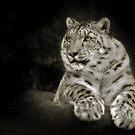Snow Leopard by Natalie Manuel