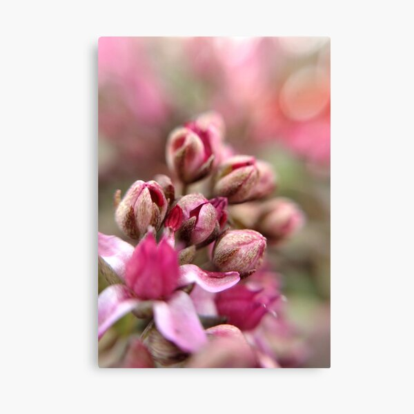 Cluster Buds Canvas Print