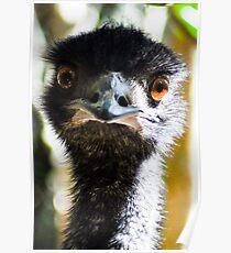 emu Poster