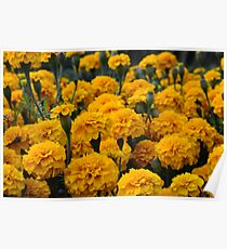 marigolds 2 Poster