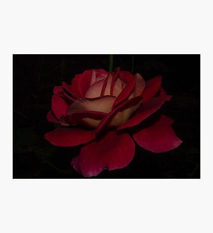 Le Rouge et le Noir Photographic Print