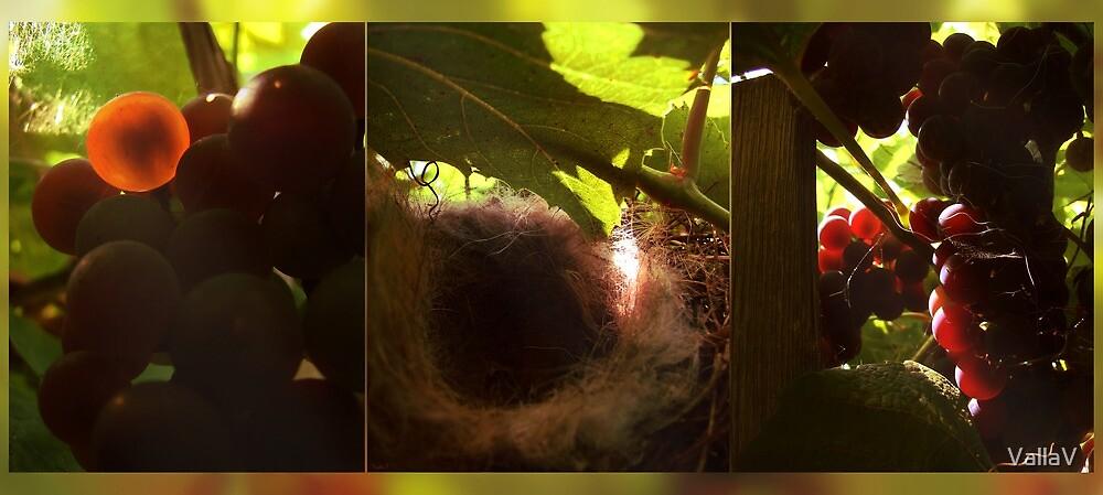 Nest in a vineyard by VallaV