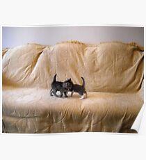 Kittens. Poster