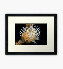 Animals like a flower Framed Print