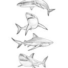 4 Great White Sharks by MadliArt