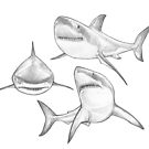 3 Great White Sharks by MadliArt