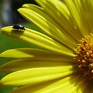 The Little Beetle and The Yellow Flower by mgxp
