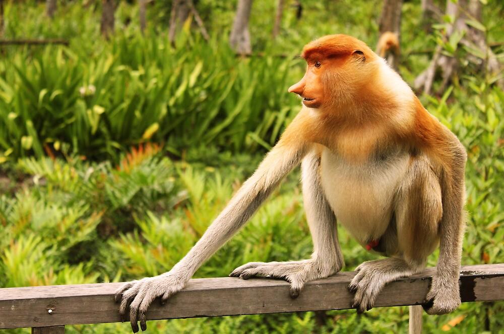 Quot The Endangered Species Proboscis Monkey Quot By