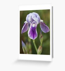 nature at her best Greeting Card
