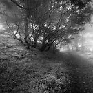 Twisty Misty Trees by Richard Mason