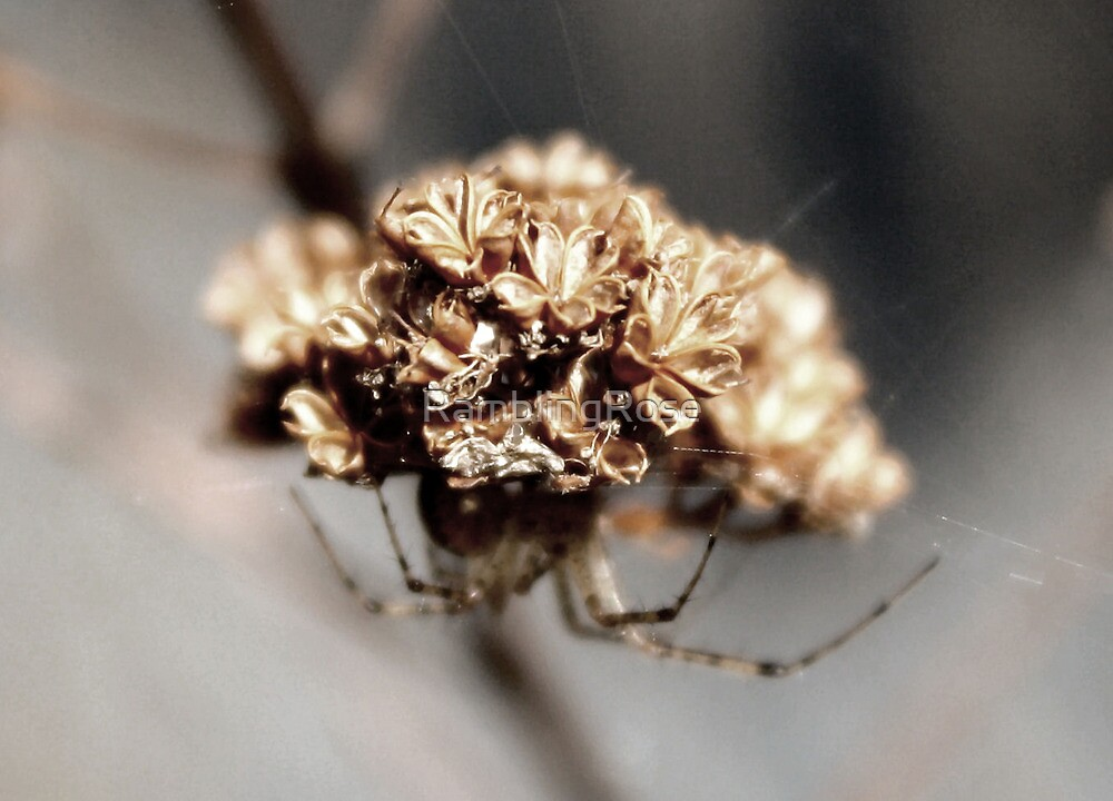 Oh Spider, Where Art Thou? IV by Rambling Rose by RamblingRose