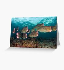 Early morning with the Humphead Parrotfish Greeting Card