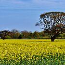 Fields of Lemon Yellow. by artfulvistas