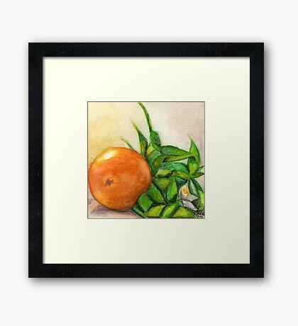 Orange and Blossom Framed Print