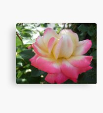 lovely.... Canvas Print