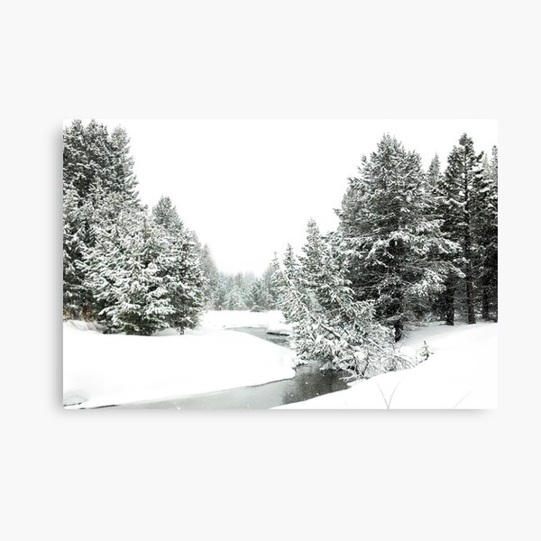 Upper Truckee River Surrounded by Snow Canvas Print