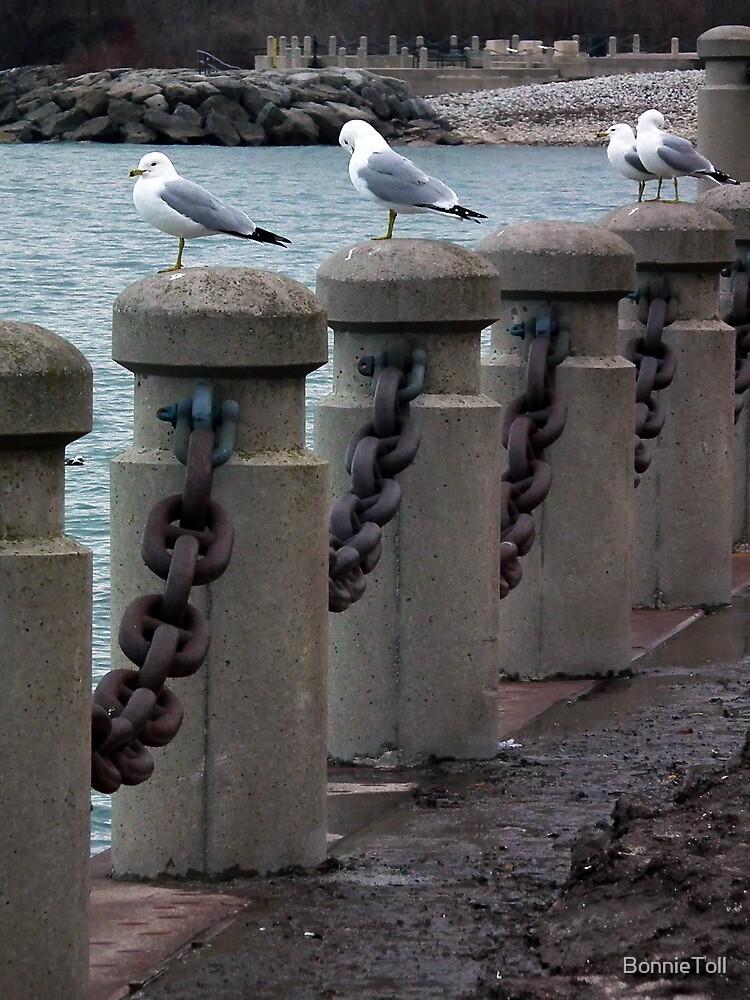Gulls On Posts by BonnieToll