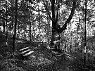 Little Bench... Big Tree by Marcia Rubin