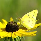 spring butterfly by rljphotography