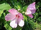 Pink Marsh Mallow Wildflower by MotherNature